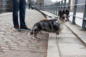 podróże z psem, czechy z psem, zwiedzanie z psem