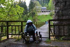 spacer z psem, podróże z psem, spacer z psem jak pada deszcz