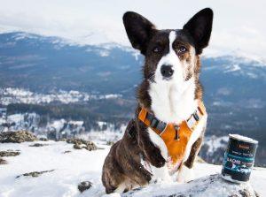 wysoki kamień, podróż z psem, spacer z psem