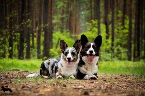 idealny spacer z psem, podróże z psem, góry z psem