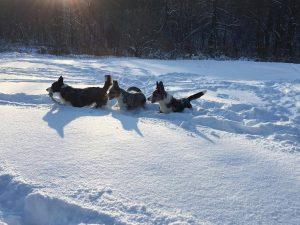 pies w górach, sudety z psem, pies w ogrodzie