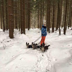 idealny spacer z psem, wyjście z psem, podróże z psem