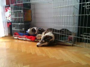 kennel, klatka dla psa, kojec dla psa