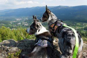 podróże z psem, izery z psem, wysoki kamień