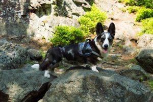 izery z psem, podróże z psem, sudety z psem, wysoki kamień